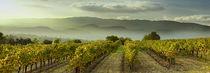 Vignes en Luberon II by gilles lougassi