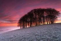 Fairy Woods by Helen Hotson