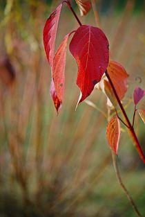 Herbstleuchten... 3 by loewenherz-artwork