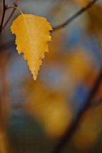 Herbstleuchten... 2 von loewenherz-artwork