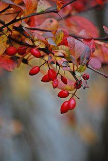 Herbstleuchten... 10 von loewenherz-artwork
