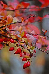 Herbstleuchten... 8 von loewenherz-artwork