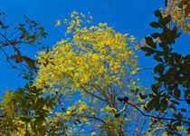 Autumn Colors Against The Sky von John Bailey