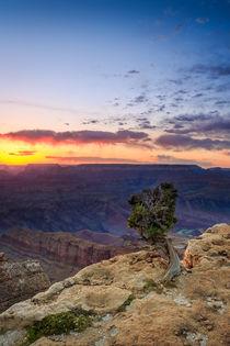 Der Grand Canyon (II) von Martin Büchler