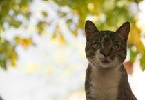 cat p  von Rob Hawkins