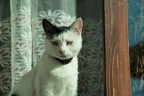 cat n von Rob Hawkins