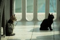 cat m von Rob Hawkins