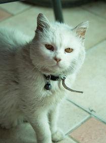 Cat j von Rob Hawkins