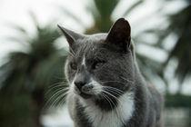 Cat G  by Rob Hawkins