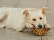 Dog Basket  von Rob Hawkins