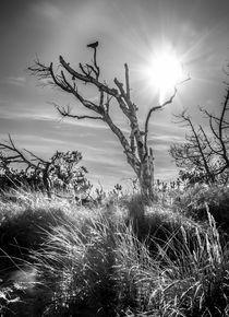 Dünenlandschaft mit Krähe von photosphere