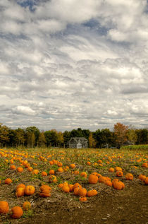 pumpkin harvest at treworgyorchards.com/ by marie schleich