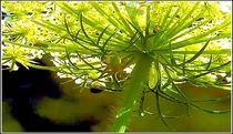 Wiesenpflanze von bilddesign-by-gitta