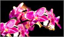 Orchideen von bilddesign-by-gitta