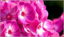 Blütenpracht by bilddesign-by-gitta