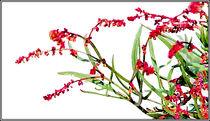Strauchblüten von bilddesign-by-gitta