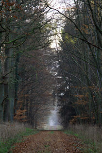 waldweg by Jens Berger
