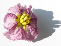Auberginenblüte von Birgit Knodt