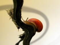 Rote Laubschnecke von Birgit Knodt