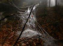wunderwerk spinnennetz by hedy beith