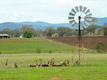 Eastern gray kangaroos at a water trough von Chris Edmunds