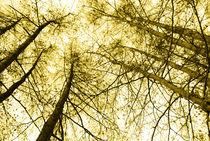 Im Wald by hannahw