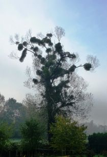 'Ascending Fog' by Juergen Seidt