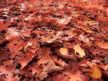 Blätterwald von fakk