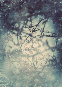 Heartofwinter-c-sybillesterk