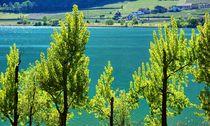 Frühling am Kalterer See von gscheffbuch