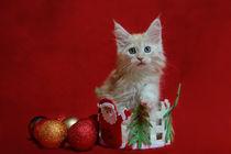 Dsc-0085-dot-mc-kitten15-11-14