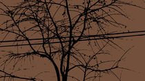 Leaves, Branches And Power Lines In The Fall von Ricardo de Almeida
