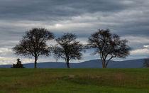 The Three Sentinels von John Bailey