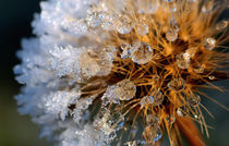 first frozen by Barbara Seiberl-Stark