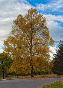 The Golden Tree by John Bailey