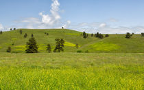 Rangelands Of Custer State Park von John Bailey