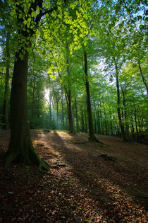 Autumn Woodland by George Kay