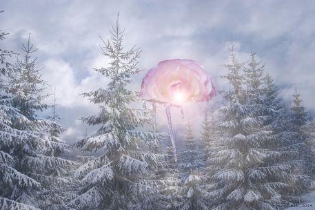 Icy-blossom-by-iris-weirich-2014