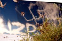starlets in front of artificial sky - Stare vor künstlichem Himmel von mateart