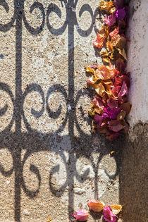 Blütenlaub im Schatten des Zauns von STEFARO .