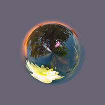 Pond in Globe von Robert Gipson