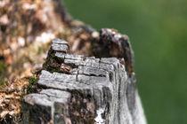 Baumstumpf von markde