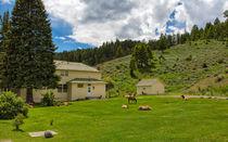 Yellowstone20140621-349a