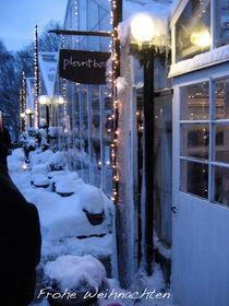 Winter in Rosendals Trädgard von Eva Peters
