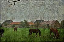 Pferdemahlzeit von leddermann