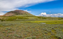 Wild Flowers And Grasses At Yellowstone von John Bailey