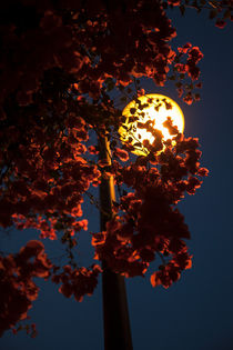Im Licht der Straßenlaterne by STEFARO .