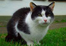 Starrer Katzenblick von Renate Stremme