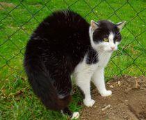 Katzebuckel von Renate Stremme