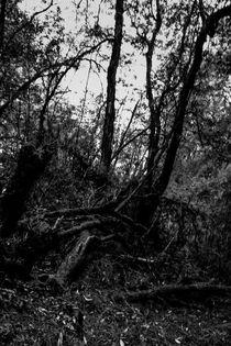 Der Wald von Guru Rinpoche II von Helge Lehmann